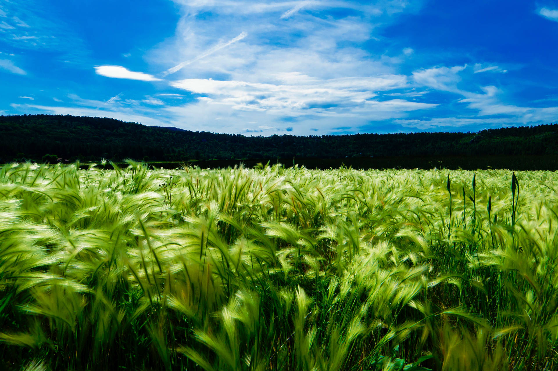 farming_field
